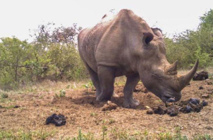 Rhino Midden